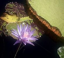 Lily Pad by sunflowerlove