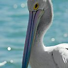 Pelican on blue by Su Walker