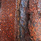 Rust Plateaus, Fungal Plains - Long Beach Island NJ by Dylan Thompson