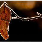 Backlit by Dave  Higgins