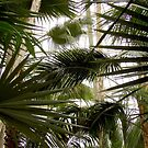 Palm Room #1, Como Conservatory, Saint Paul by Timothy Wilkendorf
