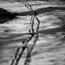 Tracks by Davide Ferrari