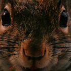 Squirrel by terrebo