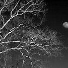 5 O'Clock Moon, February by Yuri Lev