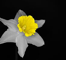 Daffo the Dilly Isolation by Chris Day