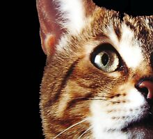 Look Into My Eyez!!! © by Dawn M. Becker