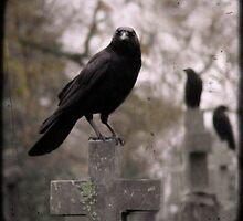 Cemetery Crows by gothicolors