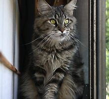 Cat's eye-view by aka-ell