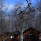 The Old Tree and Shed by vigor
