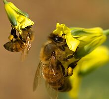 Busy worker bees  by thelense