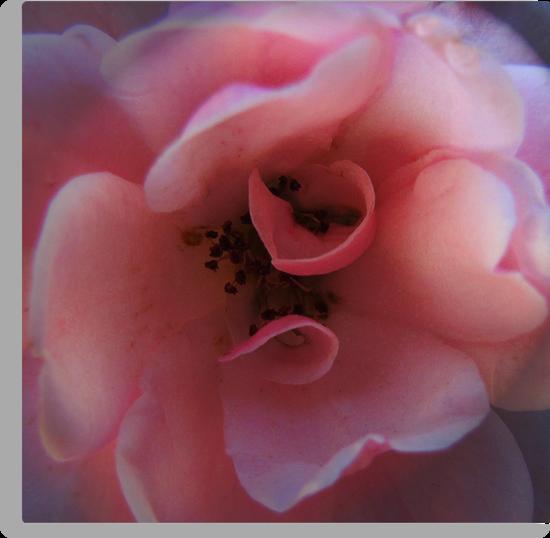 Rose Tone by Mistyarts