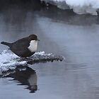 White-throated Dipper by Katariina Lonnakko