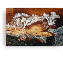 Beyond The Coppice Canvas Print