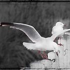 Seagulls 3 by pennyswork