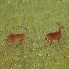 Young Deer by Annlynn Ward