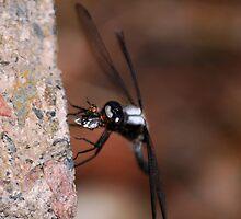 Dragonfly Eating a Fly by Diane Blastorah
