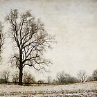 trees in winter by Kelly Letky