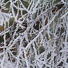 February frost by Bluesrose