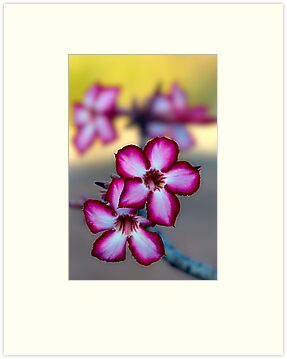 Colour Of Life XXXIX (Impala Lily) by Damienne Bingham