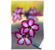 Colour Of Life XXXIX (Impala Lily) Poster