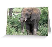 The Elephant {Loxodonta Africana} Greeting Card