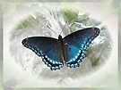 Red-Spotted Purple (Limenitis arthemis) Butterfly by MotherNature
