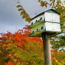 Vermont Purple Martin House by Joe Jennelle