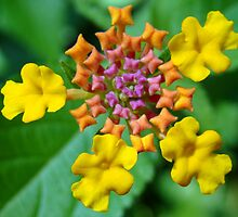 Lantana Jewels by BLemley