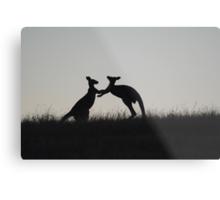 Kangaroos, Boxing for the Lady - Whittlesea, Victoria Metal Print