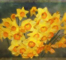 A Host of Golden Daffodils by Elaine Teague