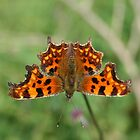 Butterfly at butterfly tarn by simoncole