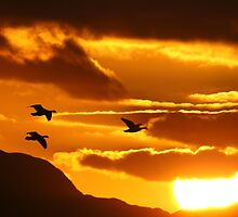 Sunset with Barnacle Geese by Tim Collier
