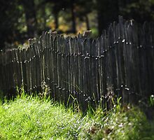 Fence in the forest by Javimage