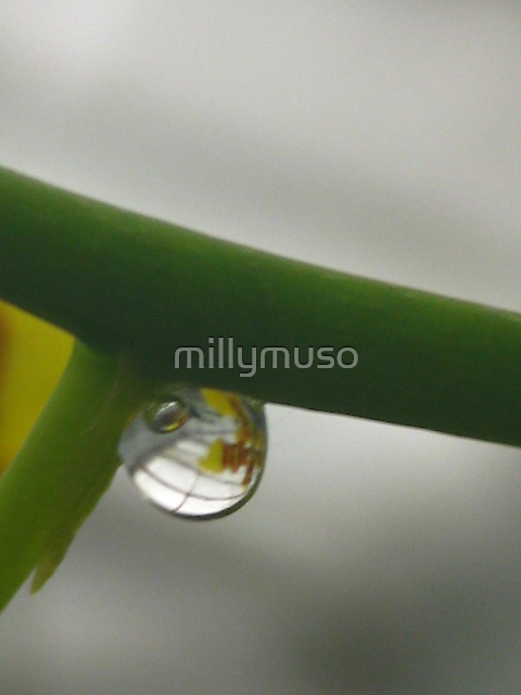 droplet reflecting by millymuso