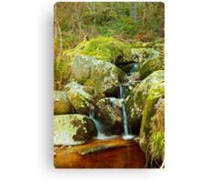 Forest Waterway Canvas Print