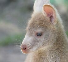 Wildlife rescue and Care wallabies by Ron Co