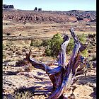 Utah Deadwood by SHickman