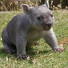 Tunna the Wombat by Ron Co