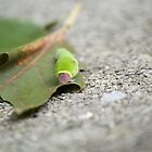 """George"" on a leaf  by Shayna Sharp"