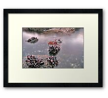Mussle bed and Moving water, Mull, Scotland Framed Print