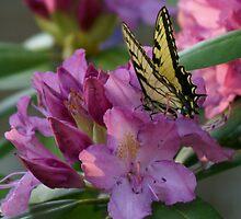 Butterfly on Laurel Bush by Annlynn Ward