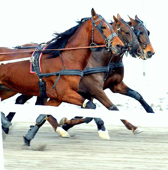 A winter day at the races by Alan Mattison