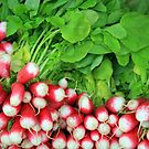 Dinan Radishes by Liz Garnett