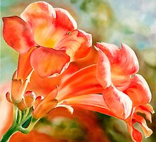 """Spanish Trumpets"" - vibrant orange trumpet shaped flowers by James  Knowles"