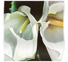 """""""Two Arums"""" - arum lilies Poster"""