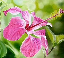 """""""Hibiscus"""" translucent pink hibiscus flower by James  Knowles"""
