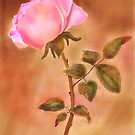 Glowing Rose by Joan A Hamilton