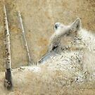 White Wolf Rest by Kay Kempton Raade