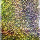 Sedum Wall Abstract by Betty Mackey