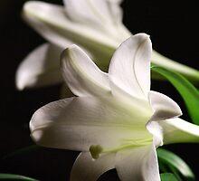 Lilies for Annie by Sheri Bawtinheimer